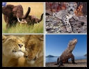 60 Amazing Animals Wallpapers [1280x1024] [.jpg] [Set 21]